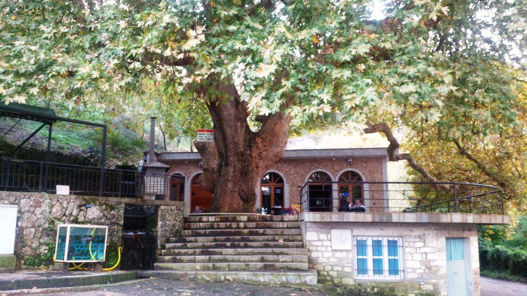 Libohova Plan Tree- Rrapi i Libohoves