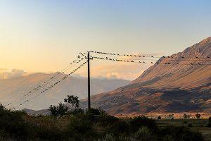 bird watching Gjirokastra Albania